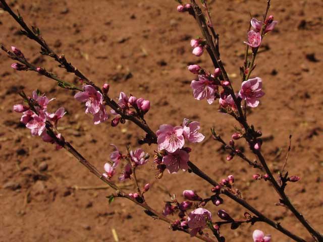 Frühling in Esmoraca Bolivien